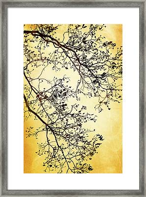 Black And Gold Tree Framed Print