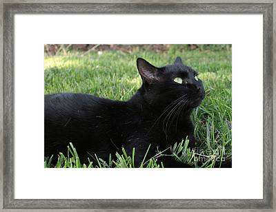 Black And Green Framed Print
