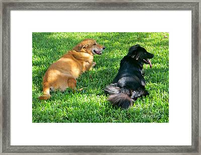 Black And Tan Framed Print by Joy Hardee