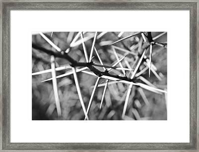 Black And White - Thorns Framed Print