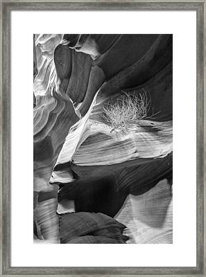 Black And White Antelope Canyon Tumbleweed  Framed Print