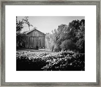 Black And White Barn Landscape - In The Vineyard Framed Print by Lisa Russo