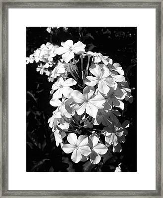 Framed Print featuring the photograph Black And White Beauty by Alohi Fujimoto