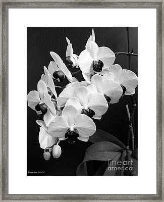 Black And White Beauty Framed Print by Ramona Matei