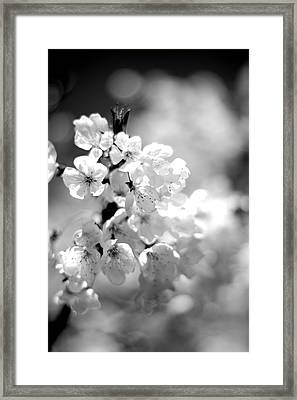 Black And White Blossoms Framed Print
