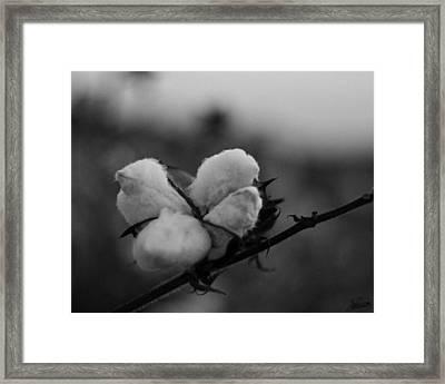 Black And White Boll Framed Print