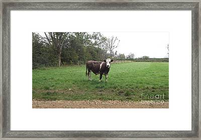 Black And White Bull Framed Print