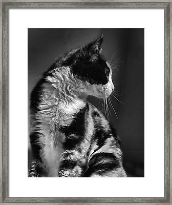 Black And White Cat In Profile  Framed Print by Jennie Marie Schell