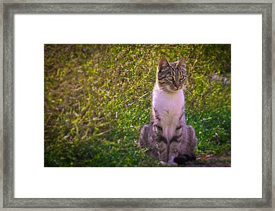 Black And White Cat In The Bush Framed Print