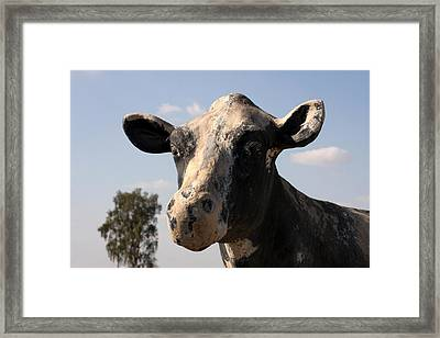 Black And White Cow Framed Print by Art Block Collections