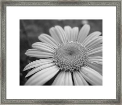 Black And White Daisy Framed Print