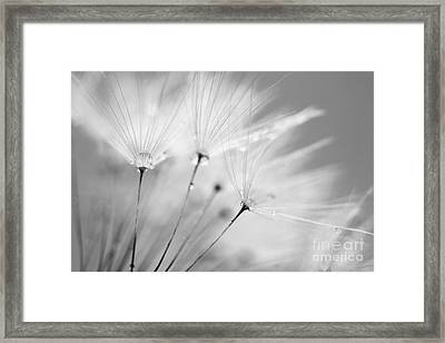 Black And White Dandelion And Water Droplets Framed Print by Natalie Kinnear
