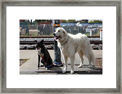 Black And White Dogs 5d25875 Framed Print by Wingsdomain Art and Photography