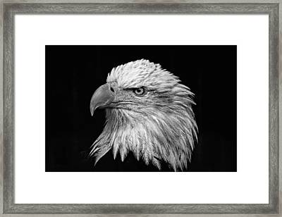 Black And White Eagle Framed Print by Wes and Dotty Weber