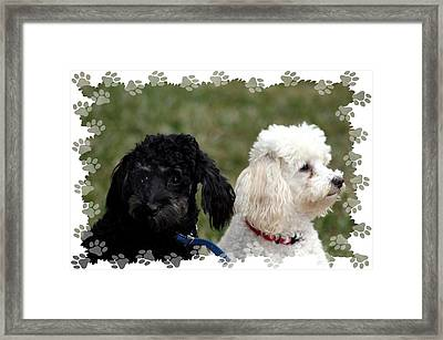 Framed Print featuring the photograph Black And White by Ellen O'Reilly