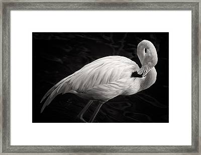 Black And White Flamingo Framed Print by Adam Romanowicz