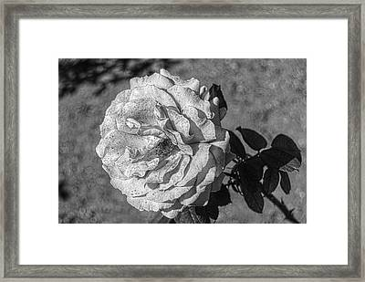 Black And White Flower #2 Framed Print by John Rossman