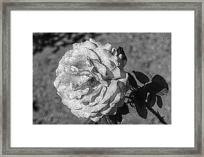 Black And White Flower #2 Framed Print