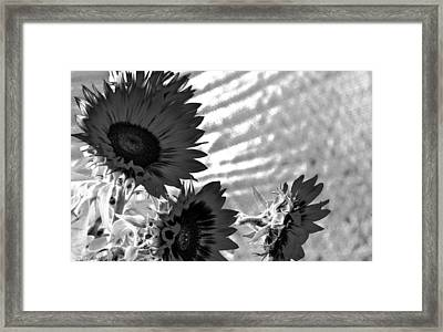 Black And White Flower Of The Sun Framed Print