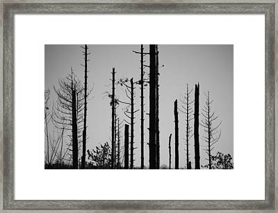 Black And White Forest 1 Framed Print