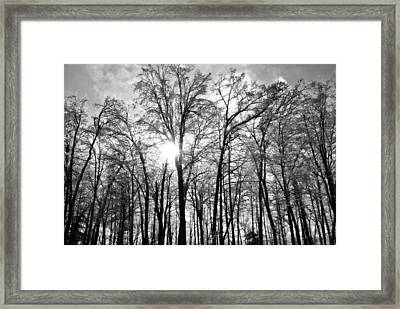 Black And White Forest Framed Print by Dawdy Imagery