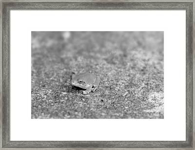 Black And White Frogger Framed Print