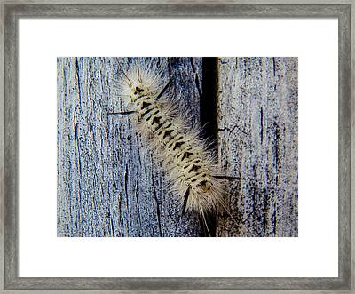 Black And White Framed Print by Heather Sylvia
