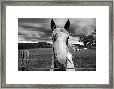 Black And White Horse Framed Print by Steven  Michael