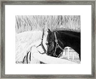 Black And White Horses Art Print Framed Print