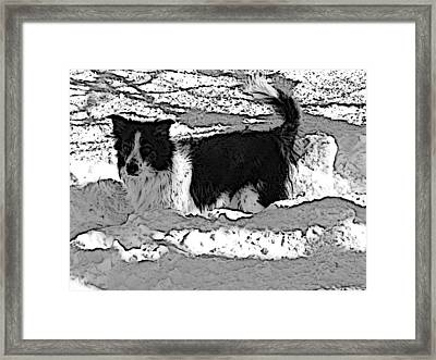 Framed Print featuring the photograph Black And White In Snow by Michael Porchik