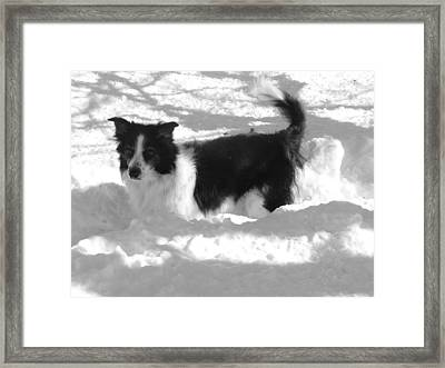 Framed Print featuring the photograph Black And White In The Snow by Michael Porchik
