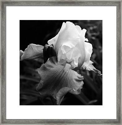 Black And White Iris 2 Framed Print by Bruce Bley