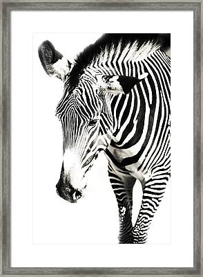 Black And White Framed Print by Jenny Rainbow