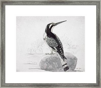 Black And White Kingfisher Framed Print