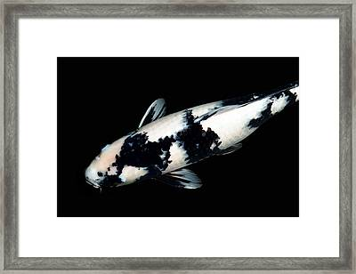 Black And White Koi Framed Print