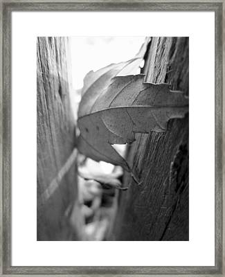 Black And White Leaf At Fort Watauga Framed Print