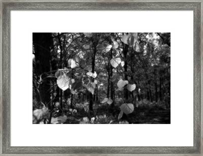 Black And White Leaves Framed Print