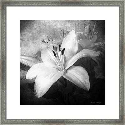 Black And White Lilies, Still Life Lily Flowers Framed Print