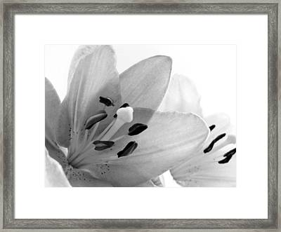 Black And White Lilies Framed Print by Marianna Mills