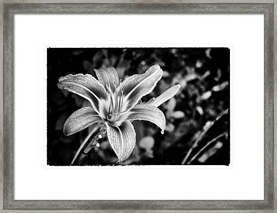 Framed Print featuring the photograph Black And White Lily by Bradley Clay