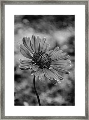 Black And White Love Framed Print