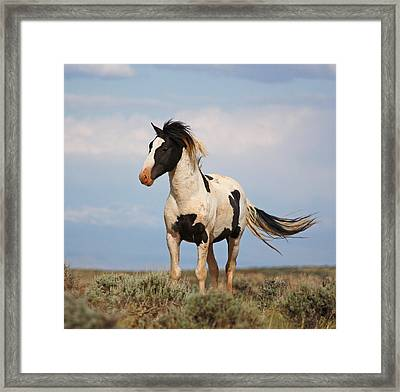 Black And White Mustang Framed Print