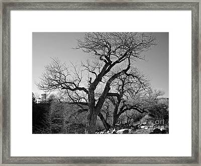 Framed Print featuring the photograph Black And White Oak by Janice Westerberg