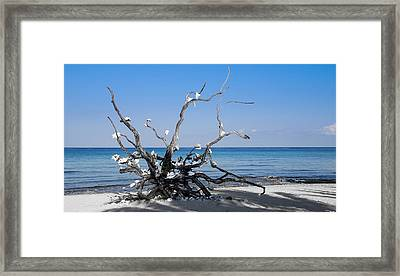 Framed Print featuring the photograph Black And White On Blue by Phil Abrams