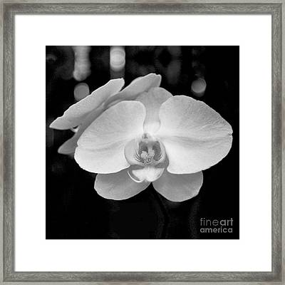 Black And White Orchid With Lights - Square Framed Print