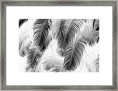 Black And White Palm Fronds Framed Print by Karon Melillo DeVega