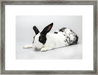 Black And White Pet Rabbi Framed Print