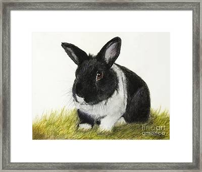 Black And White Pet Rabbit Framed Print by Kate Sumners