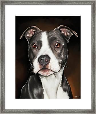 Black And White Pit Bull Terrier Framed Print