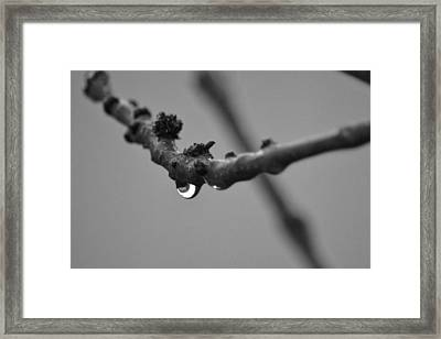 Framed Print featuring the photograph Black And White Raindrop by Naomi Burgess